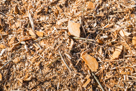 Detailed view at a pile of chipped trees after pruning of the trees in springtime. photo