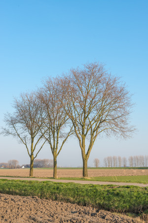 Bare trees in a Dutch polder landscape with a country road and a plowed field. photo
