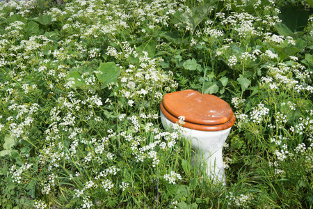 Toilet bowl with wooden toilet seat and lid dumped in th wild flowers and plants of a nature area  photo