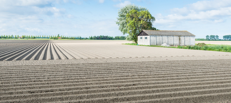 Large field with newly seeded potatoes in ridges and an old barn in springtime. photo
