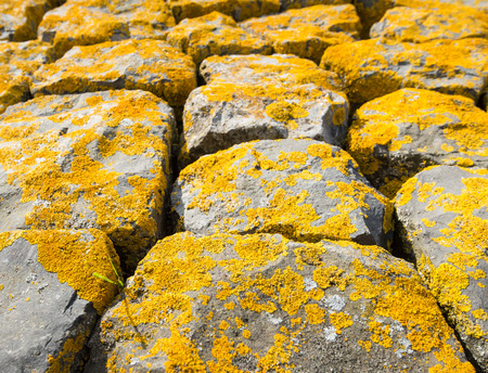 Closeup of basalt blocks at the riverside covered with yellow colored lichen. photo