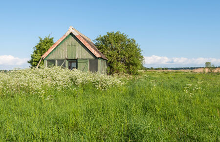 Landscape in springtime with an old abandoned wooden barn and in the foreground fresh grass and white flowering cow parsley.