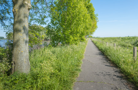 seemingly: Rural landscape with a row of trees and a small seemingly endless bicycle path.