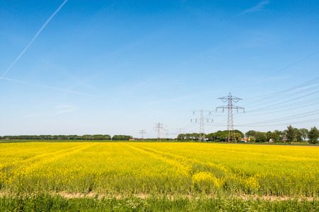 napus: Composition of yellow flowering Oil Seed or Brassica napus, a blue sky and power pylons with high voltage lines. Stock Photo