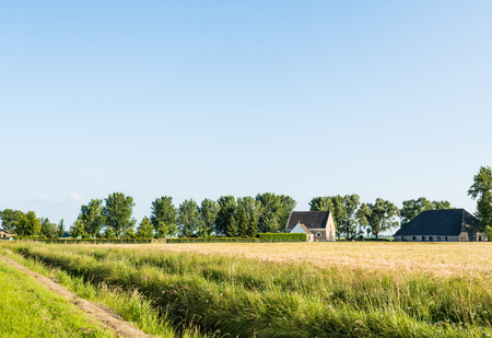 Dutch landscape with ripening wheat and an old farm in the background. photo