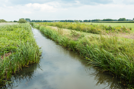 polder: Polder landscape in the Netherlands diagonally bisected by a ditch with reeds on the waterfront.