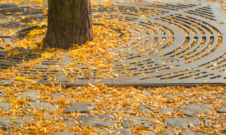 The first yellow leaves have fallen on the pebbles of the pavement in the city in the beginning of the autumn season. photo
