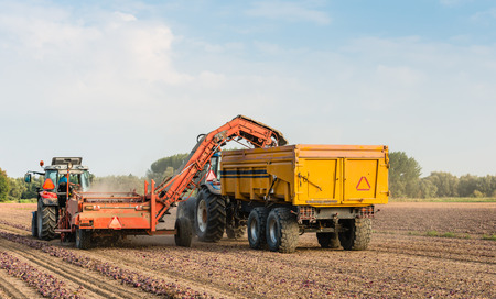 With a picking machine mounted at the tractor and a farm trailer the dried red onions are collected from the field. photo