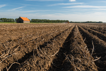 Old brick barn with an orange tiled roof in a large field with dead potato tops on the ridges of clay. It is autumn and the harvest of potatoes has already started at the back in the field. photo