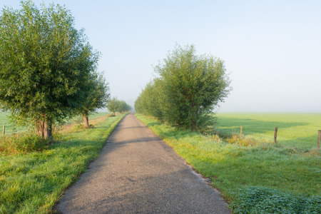 A narrow country lane between rows of willow trees and meadows on an early misty autumn morning but the sun is starting to break through the fog. photo