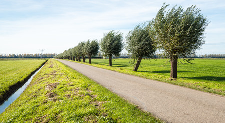 Rural landscape in autumn with a countru road and a row of pollard willows on a sunny afternoon. photo