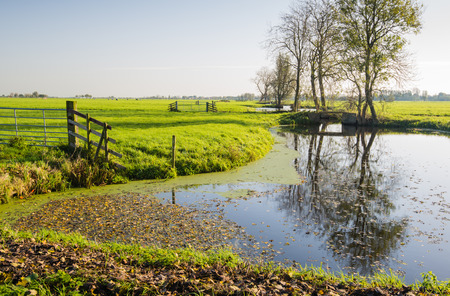 Dutch polder landscape in autumn with fallen leaves on the mirror smooth water surface. photo