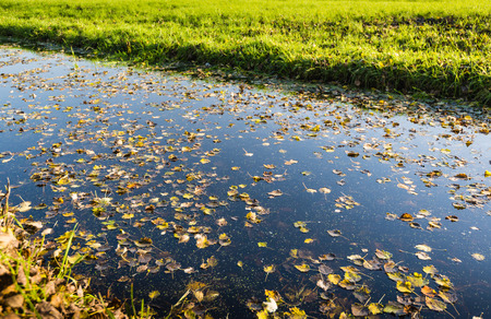 Fallen tree leaves floating on the mirror smooth water surface of a wide ditch on a sunny and windless day in the fall season. photo