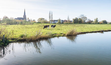 Two black and white cows grazing on the grass on the shore of a lake while in the background the contours of a small Dutch village are visible. photo