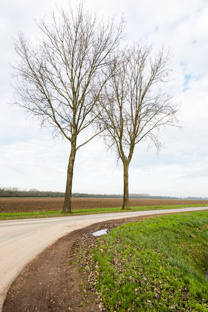 Bare trees beside a country road in a rural landscape on a cloudy day in the fall season. photo