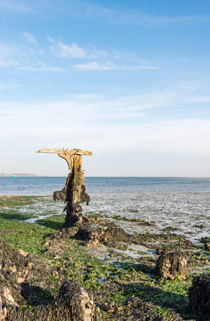 ship wreck: Remnants of an old ship wreck on a Dutch coast at low tide.