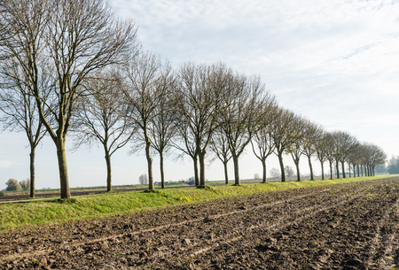 polder: A long row of bare trees in autumn beside a country road and a ploughed field of clay ground in a Dutch polder landscape.