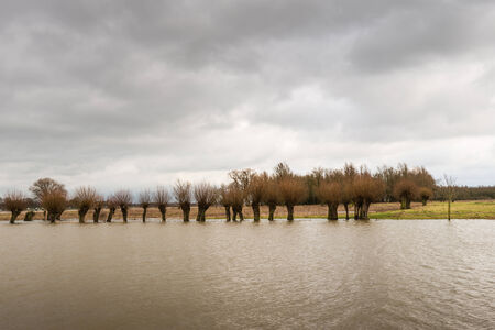 Row of pollard willows in the water under a threatening sky with dark clouds.