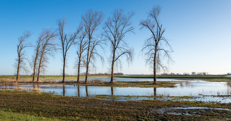 Bare trees in the wetlands of a Dutch nature reserve on a sunny day in winter. photo