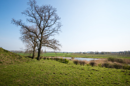 agricultural area: Bare trees at the foot of a dike in the foreground of an agricultural area in the Netherlands.
