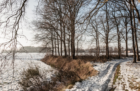 Flat farm land at the edge of a forest with bare trees as silhouettes contrasting with the gray snow sky. photo