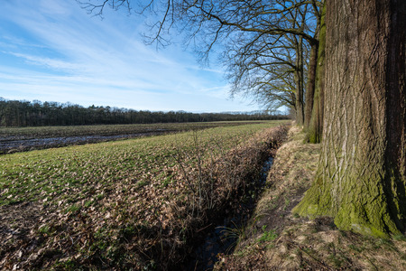windless: Leafless trees with mossy bark beside a ditch and a wet field on a windless day in winter with cirrus clouds in the blue sky. Stock Photo