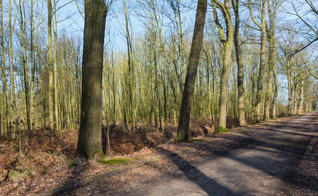 Wood with leafless trees and a sandy path with shades on a sunny day in the winter season. photo