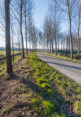 Backlit image of a curved country road with bare trees on either side. It photo