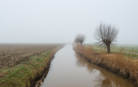 pollard: Ditch beside plowed farmland and a row of leafless pollard willows reflected in the water surface. It is early in the morning on a foggy at the end of the winter season.
