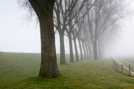 Rural landscape with a dike and a row of tall trees on a foggy day in the end of the winter season. photo