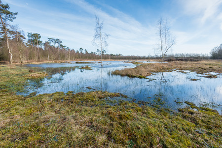 mirror on the water: Marshy nature area with plants and trees reflected in the smooth as a mirror water surface of a fen. It is a sunny day at the end of the winter season.