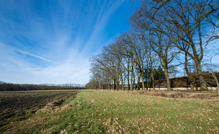 windless: Leafless trees beside a farmfield on a windless day with cirrus clouds in winter. On the right a long barn roof covered with green mossy tiles.