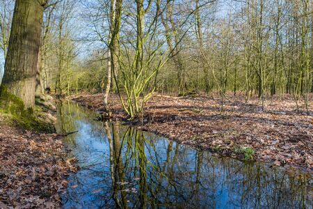 Small creek in a Belgian nature reserve reflects the branches of the trees and the blue sky on a sunny day in the winter season. photo
