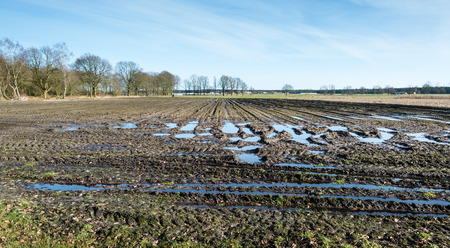 muddy tracks: Muddy Belgian farmland with tire tracks in the foreground and the edge of a small village in the background on a sunny day in the end of the winter season.