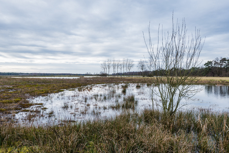 widespread: Widespread swampy nature area with plants, trees and a small fen. It is a cloudy day at the end of the winter season.