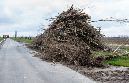 pollard willows: Large heap with pruned branches along a narrow country road in a Dutch polder landscape.