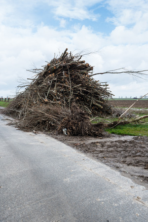 pollard willows: Large pile with pruned branches along a narrow country road in a Dutch polder landscape on a cloudy day in the beginning of the spring season..