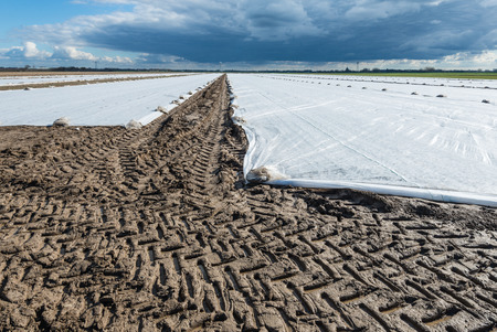 affixed: Threatening clouds above a farm field with agricultural plastics in order to accelerate the growing of the crop in the early spring season.
