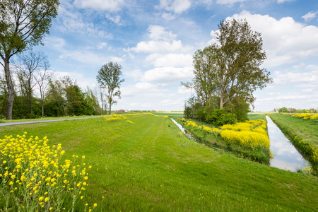 Picturesque landscape with yellow flowering rapeseed in the early spring season. photo