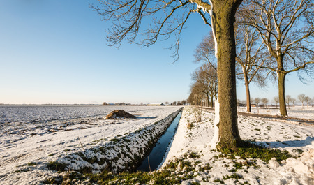 agricultural area: Row of bare trees next to a country road in agricultural area covered with a layer of snow.