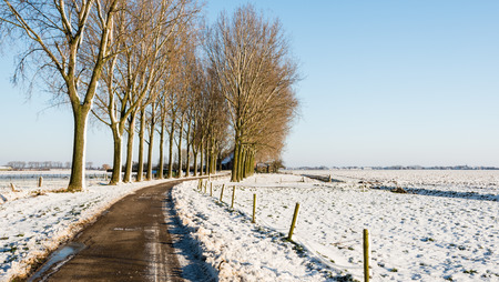 Row of tall bare trees beside a curved country road and a field with snow on a sunny day in winter. photo