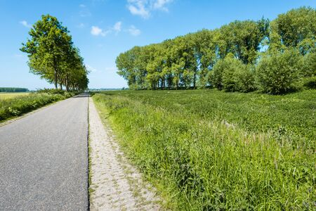seemingly: Seemingly endless road through a rural area and in the roadside tall trees and various flowering wild plants. It is springtime now.