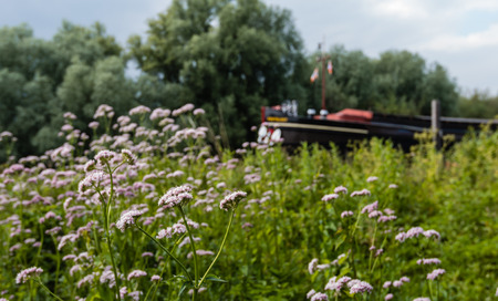 freighter: Nature area with gentle pink flowering valerian and other wild plants. In the background the bow of a freighter historical is blurred visible.