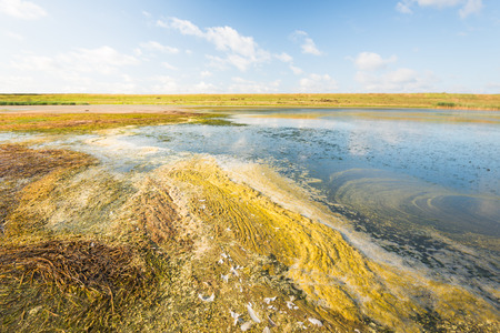 the residue: Colorful Dutch nature reserve with flowering plants, salt water, plant residue, algae, foam and seaweed in the foreground and an embankment in the background.