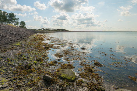 windless: Backlit view at an estuary in the Netherlands with a seawall, stones, seaweed, algae, and a mirror smooth reflective surface. Its a windless day in the summer season.