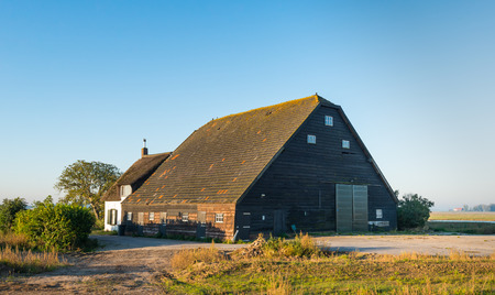rooftile: Large wooden barn with tiled roof and an old whitewashed house with thatched roof in a polder in the Netherlands. The buildings date back to the year 1900.
