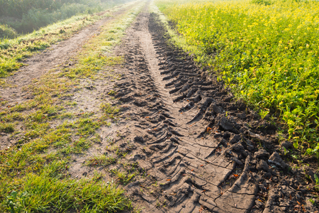 soil texture: Closeup of tire tracks in clay soil on a dirt road along a field with blooming yellow rapeseed. Its early in the morning at the start of the fall season and the morning mist is still visible in the distance. Stock Photo
