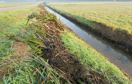 polder: Plant remains lying on the shore after the mandatory periodic maintenance of the ditch in order to ensure the necessary water flow in the agricultural polder. Its early in the morning and the grass is still dewy.