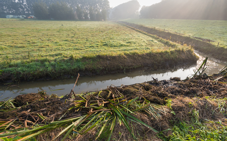 polder: Plant remains lying on the shore after the mandatory periodic maintenance of the ditch in order to ensure the necessary water flow in the agricultural polder. Its early in the morning and some misty is still visible in the distance.