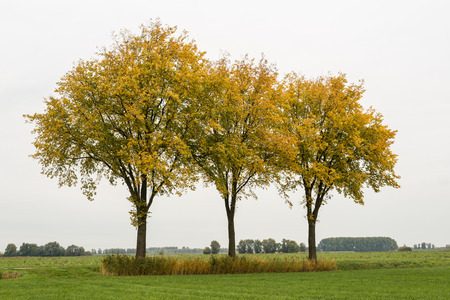 begun: Rural area with three trees with yellow leaves against a cloudy grey sky. Autumn has begun.